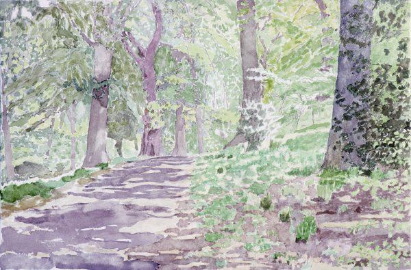 Highgate woods 4