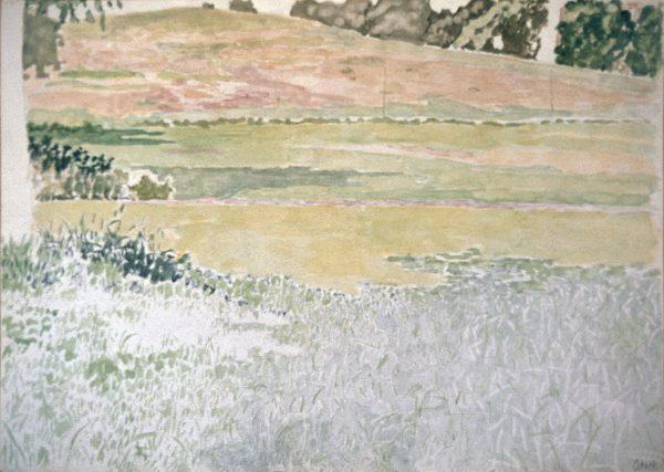 Primrose grass 2